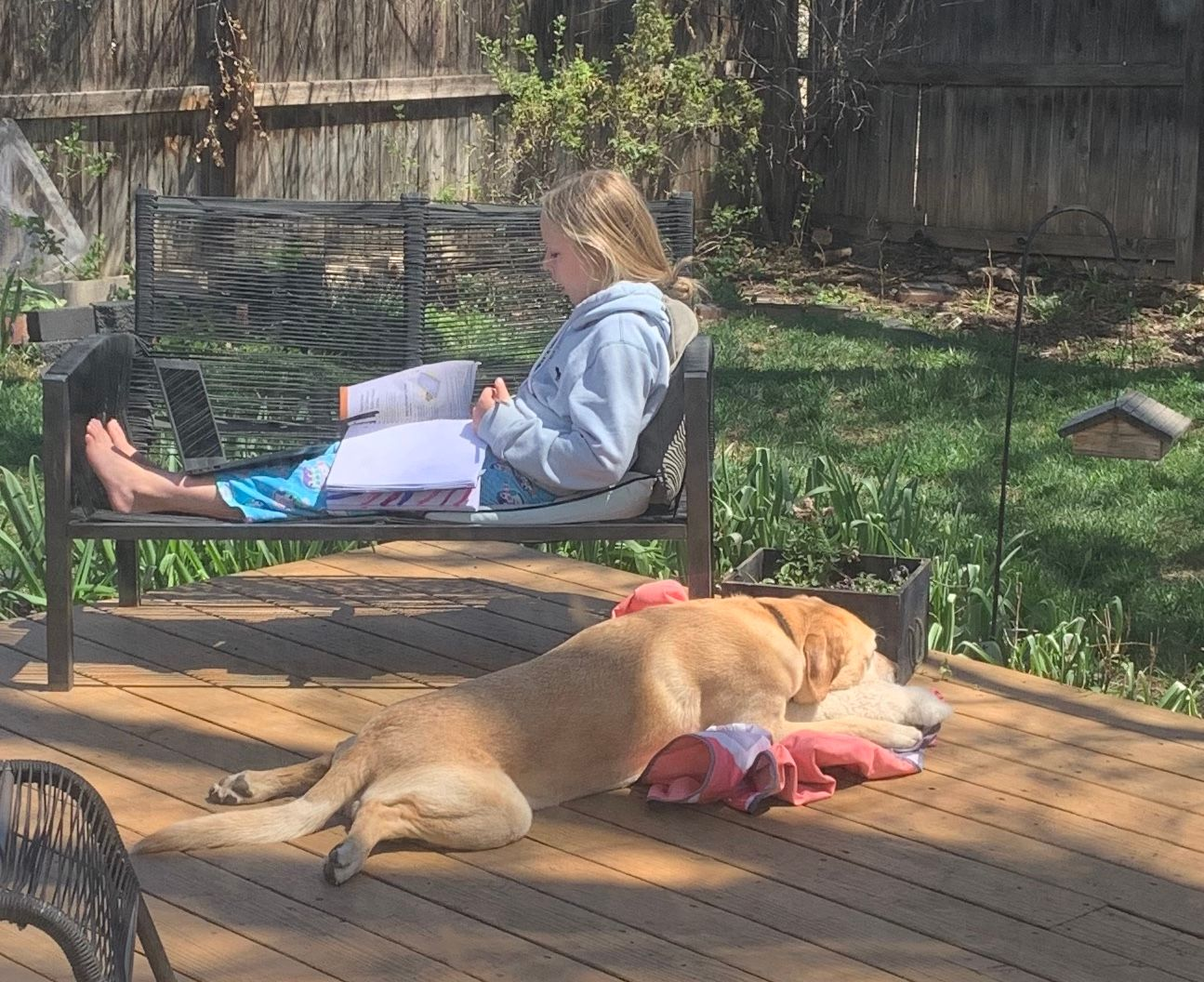 Amy doing school from home with Winston alongside.