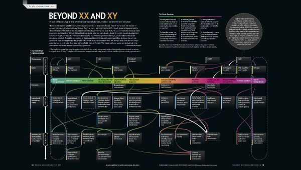 """A graphic visualization from the Scientific American in 2017 which shows the complexity and variety of sexual differentiation at different stages of life based on a variety of factors. The title reads """"Beyond XX and XY"""" and has a small caption underneath which reads """"A host of factors figure into whether someone is female, male or somewhere in between. Humans are socially conditioned to view sex and gender as binary attributes. From the moment we are born–or even before–we are definitively labeled """"boy"""" or """"girl."""" Yet science points to a much more ambiguous reality. Determination of biological sex is staggeringly complex, involving not only anatomy but an intricate choreography of genetic and chemical factors that unfolds over time. Intersex individuals-those for whom sexual development follows an atypical trajectory-are characterized by a diverse range of conditions, such as 5-alpha reductase deficiency (circled). A small cross section of these conditions and the pathways they follow is shown here. In an additional layer of complexity, the gender with which a person identifies does not always align with the sex they are assigned at birth, and they may not be wholly male or female. The more we learn about sex and gender, the more these attributes appear to exist on a spectrum. -Amanda Montañez""""  There is a colored gender spectrum legend at the top right which starts with green on the left (representing a typical biological female) and merges into purple (representing a typical biological male). The chart shows the different factors that determine sex (Chromosomes, Genes, Hormones, Internal and external sex organs, and Secondary sex characteristics (eg. breasts, facial hair)) across different stages of human life (Conception, Birth, and Puberty) as well as across the sex and gender spectrum (Females, Intersex conditions, and Male)."""